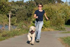 astuces pour perdre du poids : Promenade avec un chien
