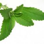 Photo des feuilles de stévia