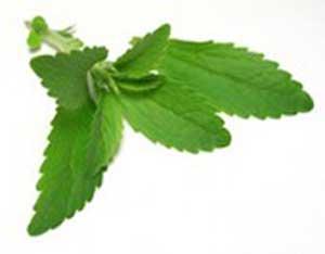 Le Stevia, alternative au sucre par excellence